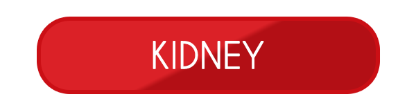 kidney fiberglass swimming pool designs
